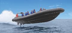 Private Bondi Bash Thrill Ride