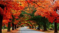 10 Day Bright Autumn Festival