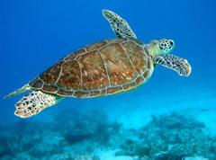 Turtle Express