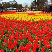 6 Day Canberra Floriade (Departs 30/09/17)