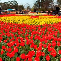 6 Day Canberra Floriade - Extended Tour (Departs 26/09/2016)