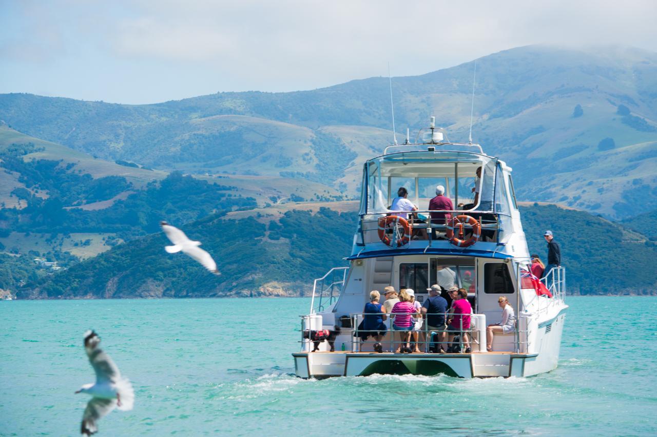 Akaroa Dolphins | Gift Vouchers