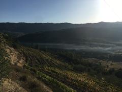 Visita Enológica à Quinta da Penada :: Enological tour to Penada Farm