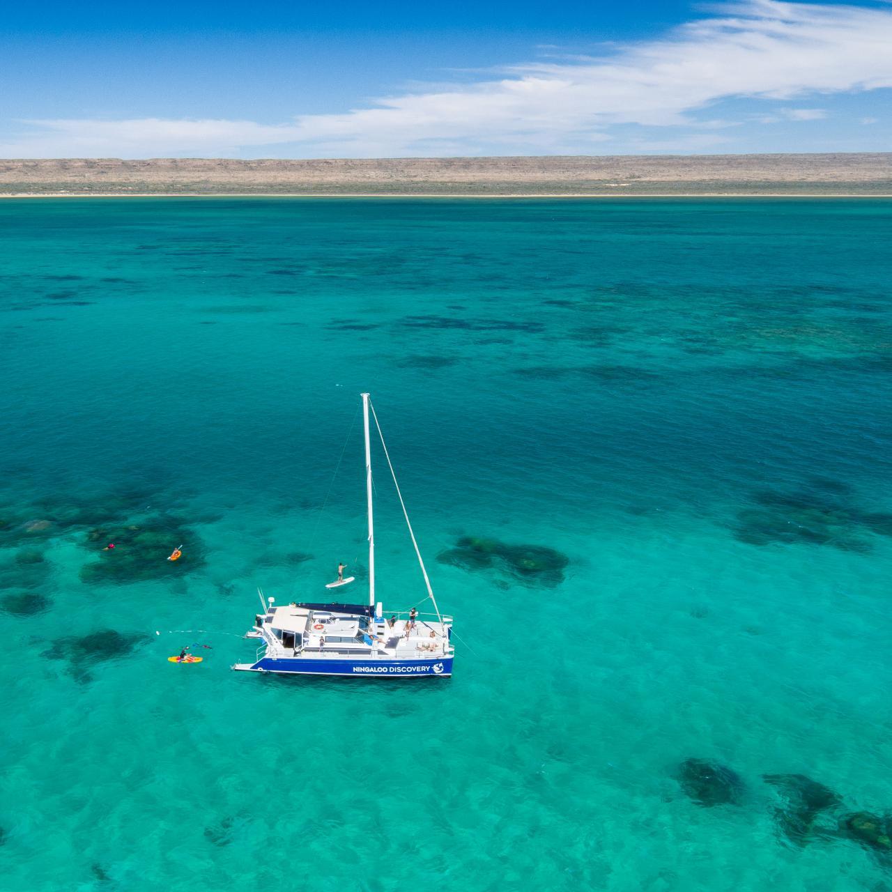 Ningaloo Whale Shark Swim & Eco Tour on a Sailing Catamaran (shoulder season)