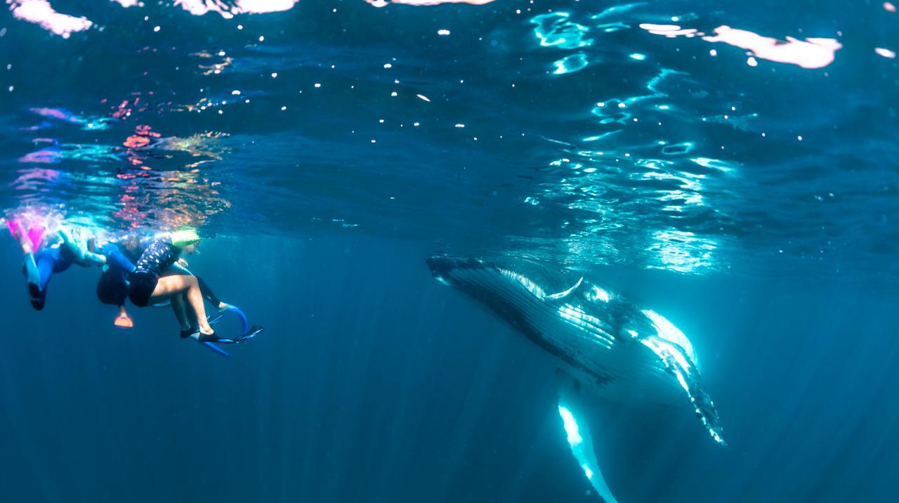 Gift Voucher - Ningaloo Humpback Whale Swim on a Sailing Catamaran