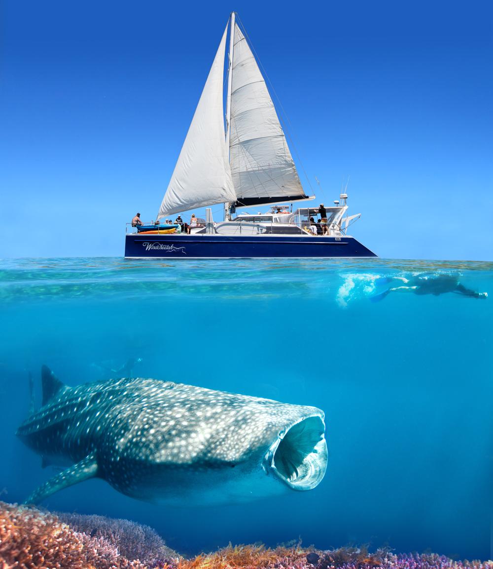 Gift Voucher - Ningaloo Whale Shark Swim on a Sailing Catamaran