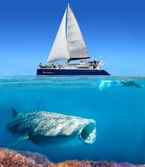 Ningaloo Whale Shark Swim & Sailing Discovery Tour