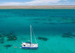 Gift Voucher - Ningaloo Whale Shark Swim & Eco Tour on a Sailing Catamaran (shoulder season)