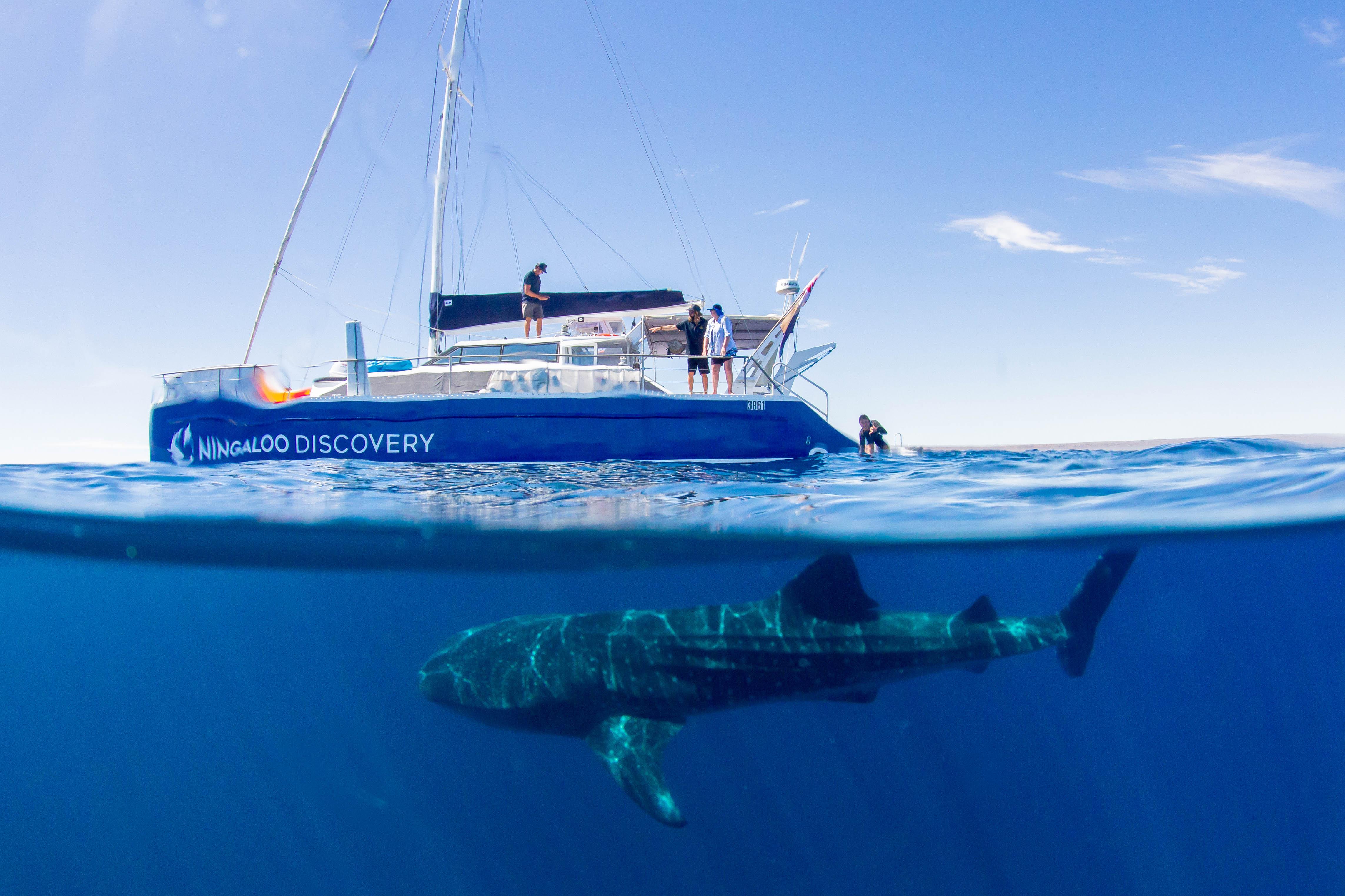 Ningaloo Whale Shark Swim on a Sailing Catamaran**