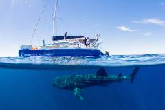 Ningaloo Whale Shark Swim on a Sailing Catamaran - 2018 season