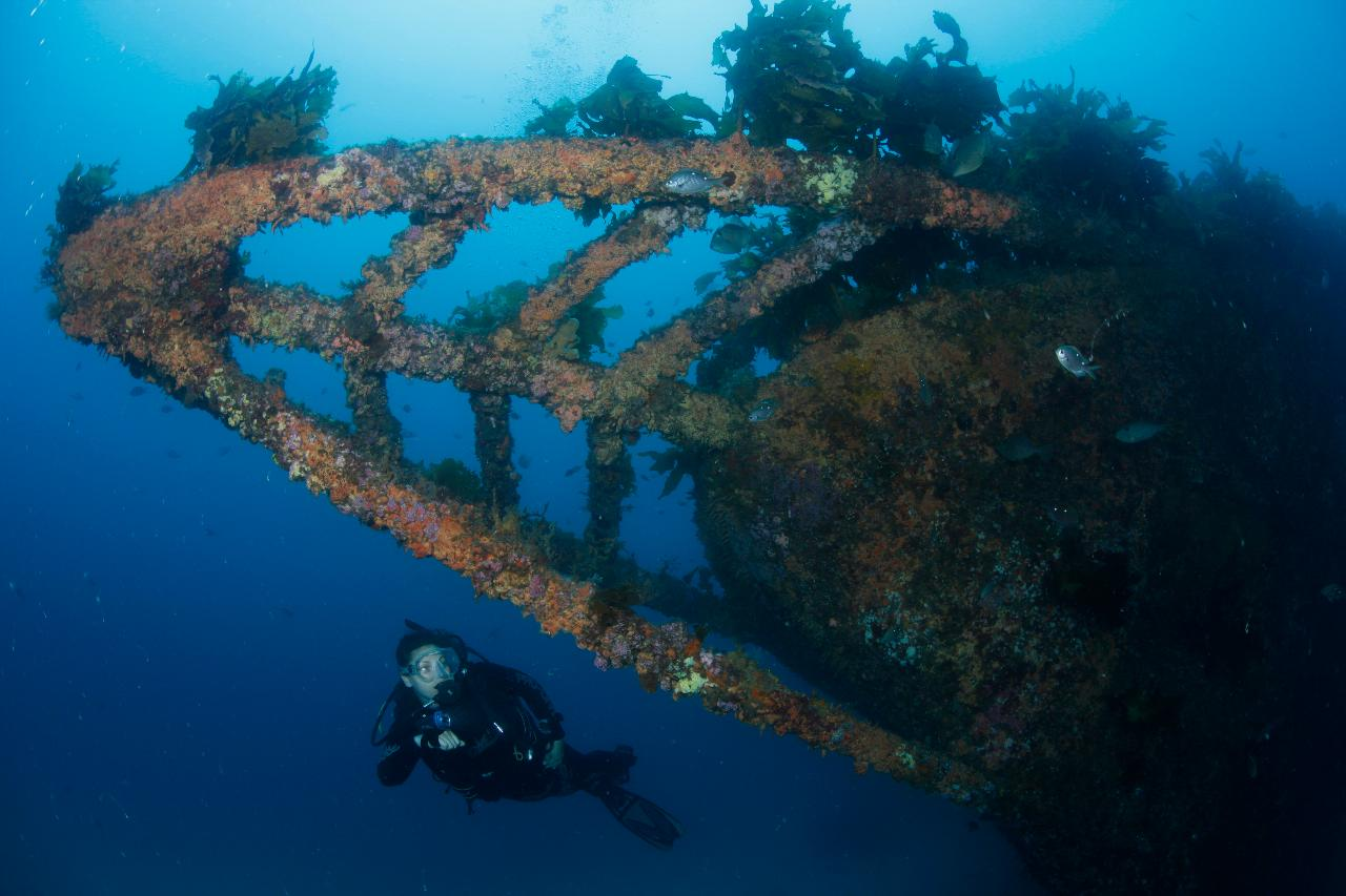 Rainbow Warrior Wreck and Reef Trip