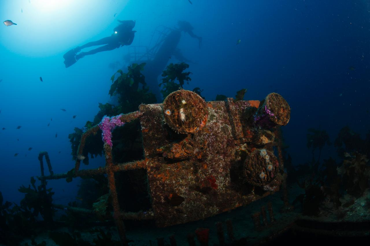Canterbury Wreck and Reef dive