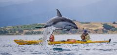 Sea Kayak Hire Full day