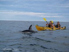 Sea Kayak Hire 1/2 day