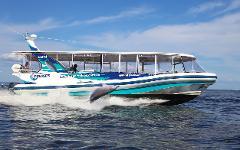 GIFT CARD - Dolphin Island Adventure