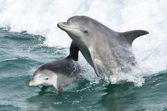 Dolphin & Scenic Marine Cruise