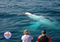 Whale Watch, Seals & evening Penguin Tour  (3.5 hrs)