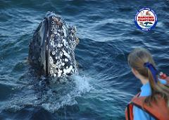 Whale Watch & Seals Tour 12:30pm (2.5hrs)
