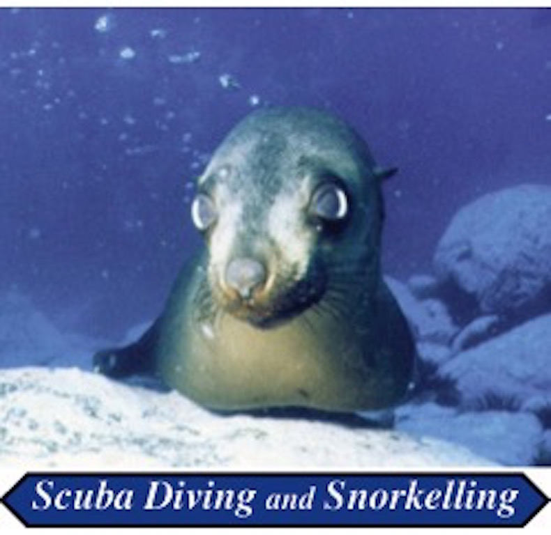 Snorkelling 1:00pm