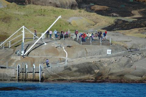 Montague Island Tour & Seal Snorkel Combo 1:00 pm 3.5 hrs (Landing on Island)