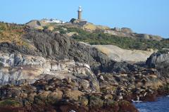 Montague Island afternoon Tour. - Departs 1:00 pm -  (Landing on Island)