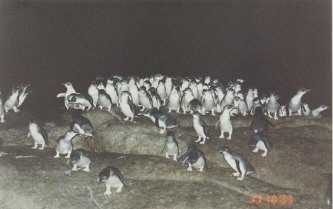 Montague Island Penguin Tour (Landing on Island)
