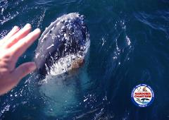 Whale Watch & Seals Tour 9:30 am (2.5hrs)