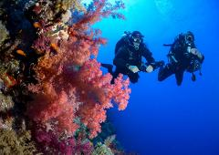 SSI Coral Identification Specialty