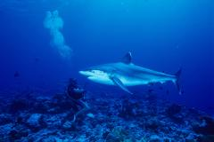 SSI Shark Ecology Specialty