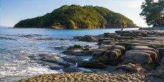 Goat Island/Tawharanui Marine Reserve Dive Charter