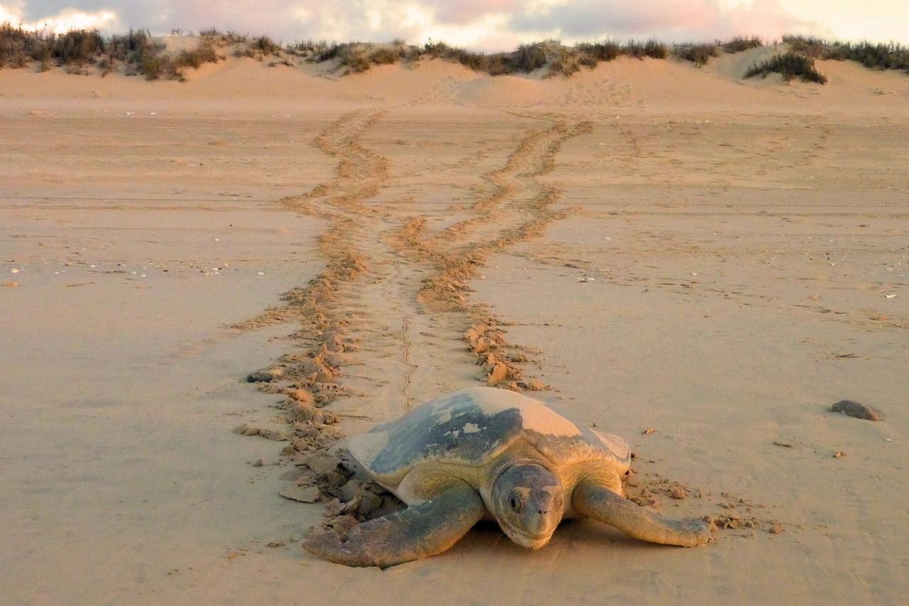 Eco Beach Sea Turtle Experience, Broome