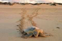 Eco Beach Sea Turtle Experience, Broome