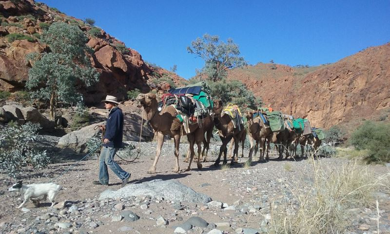 Flinders Ranges with Camels - 9 day walking tour
