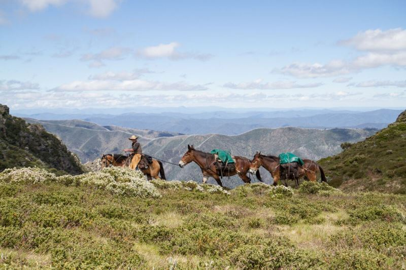 Victorian Alps with pack horses 6-day walking tour