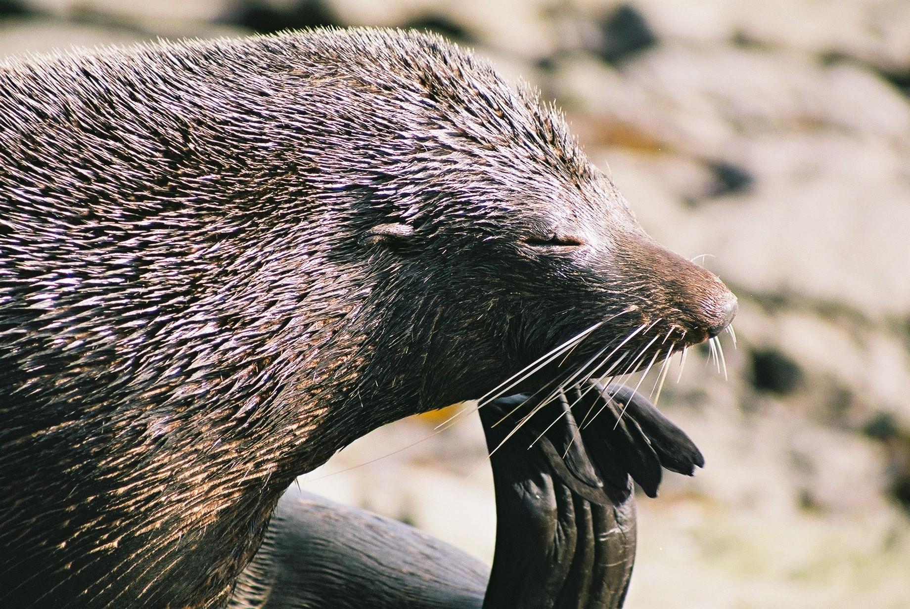 Walk, Seals & Sail