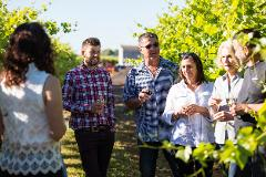 Gourmet Food & Wine Tour