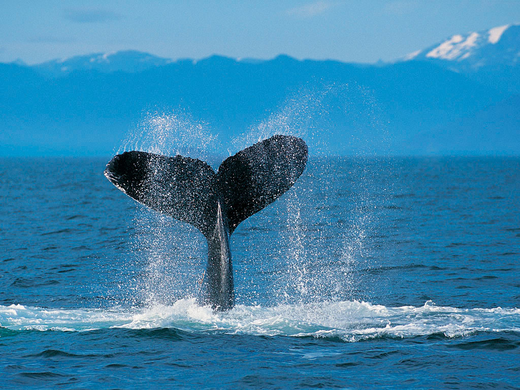 Tangalooma 1 Day Whale Watching Cruise - BRISBANE