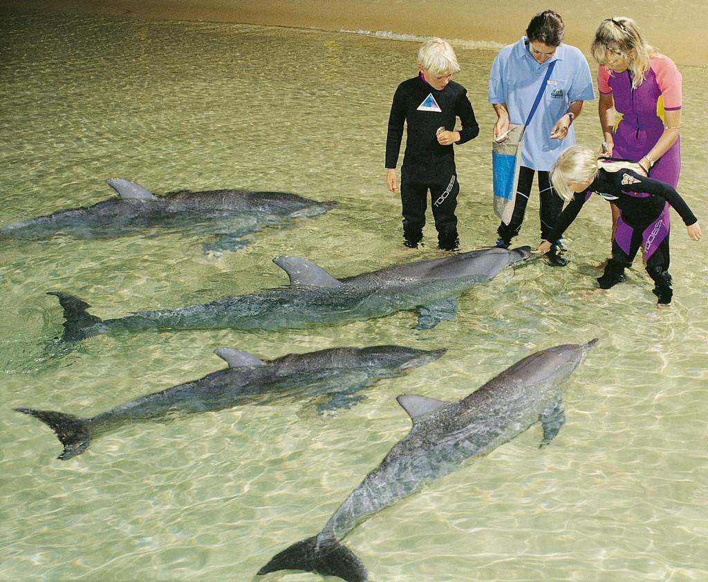 Tangalooma 2 Day Island Wild Dolphin Resort & Eco tour