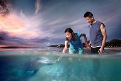 Tangalooma 2 Day Island Wild Dolphin Resort & Adventure tour