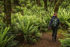 Private Kepler Track Short Guided Walk