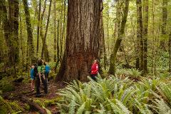 Kepler Track Short Guided Walk - Alongside Lake Te Anau