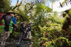 Milford Track Guided Walk from Te Anau