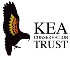 Donation to Kea Conservation trust