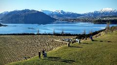 Taste of Wanaka Wine Tour