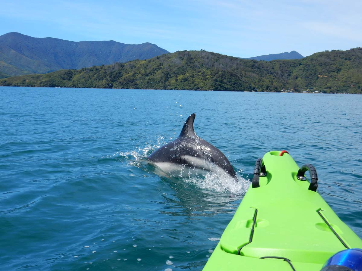 1 Day Queen Charlotte Sound Guided Kayak