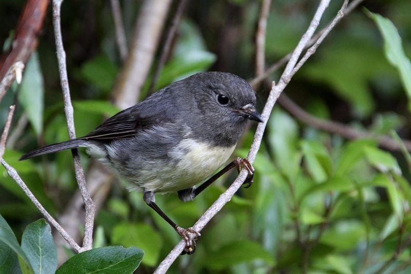 Guided Motuara Island Tour Bird Sanctuary Tour