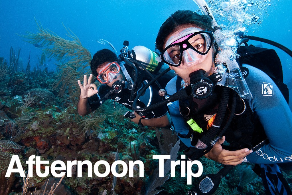 Afternoon 2 PM - 2 Tank Boat Trip for Certified Divers (1 or 2 days)