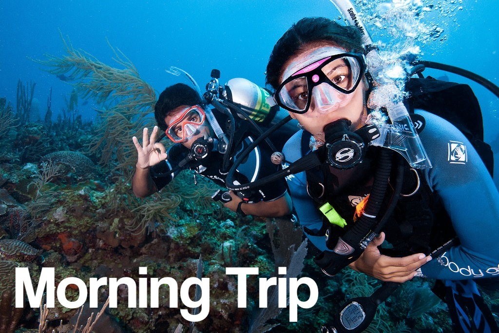 Morning 9AM - 2 Tank Boat Trip for Certified Divers (1 or 2 days)