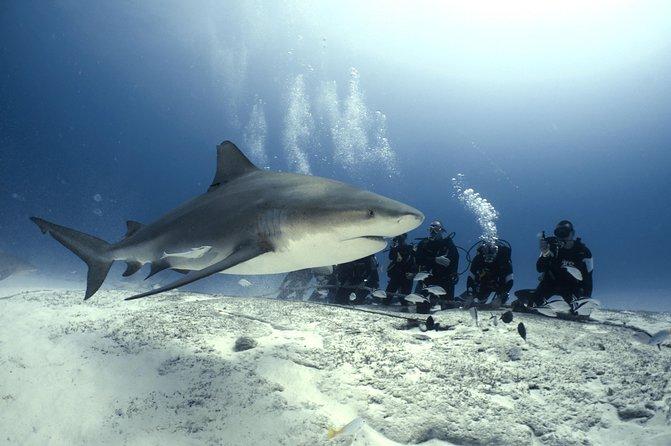 Bullshark Diving - (Only Mid Nov-Mid Feb)