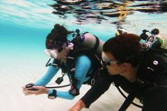 PADI Advanced Open Water Diver - eLearning Diver ( Practical portion only)
